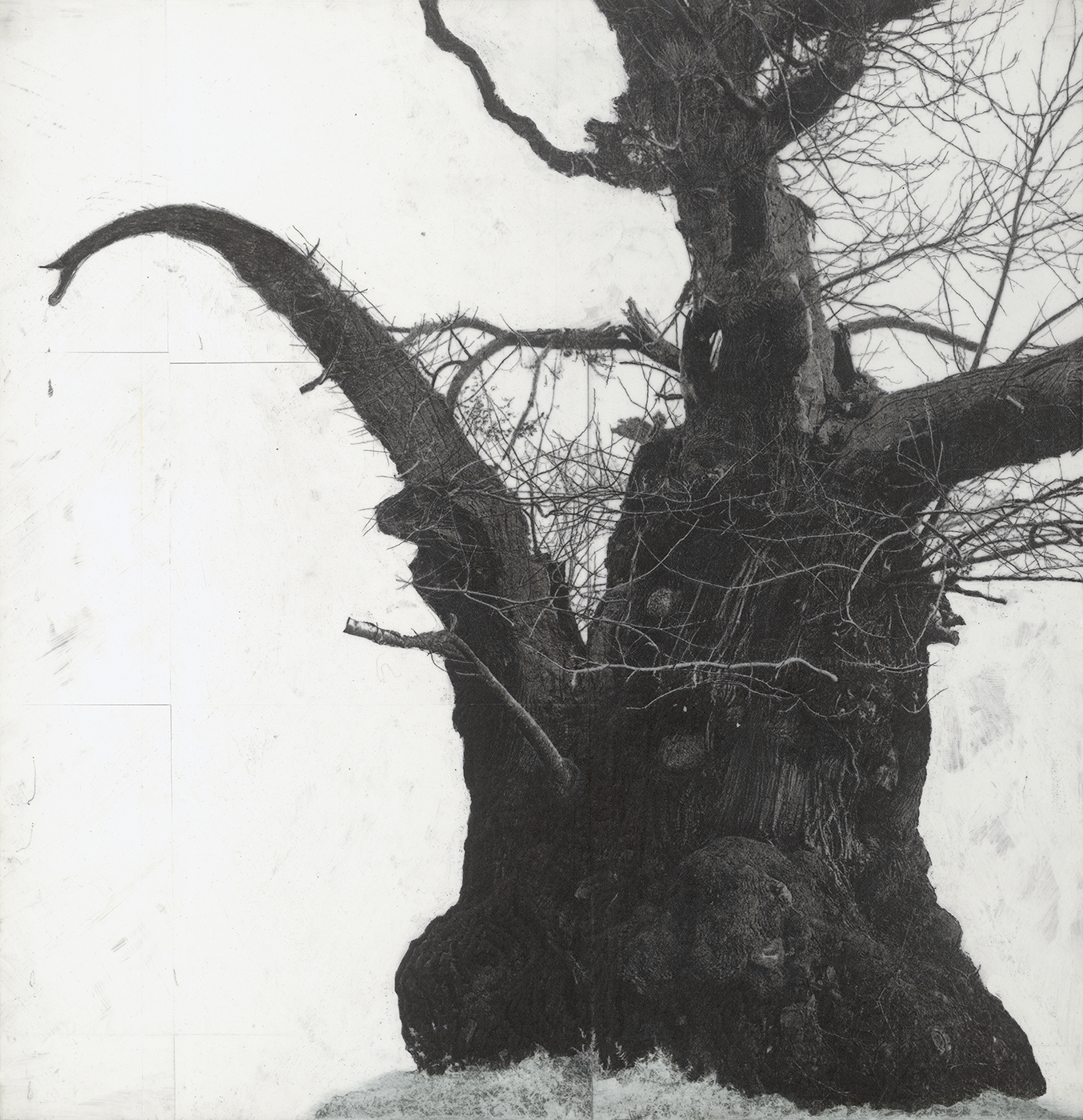Patrick Van Caeckenbergh - Drawing of old trees on wintry days during 2007-2014 _C, 2007-2014